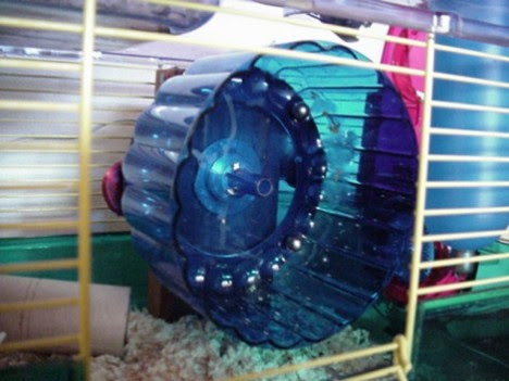 Hamster-powered Light