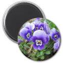 Purple Pansies Fridge Magnets
