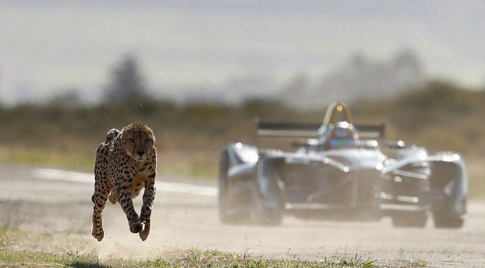 cheetah-696x385.jpg