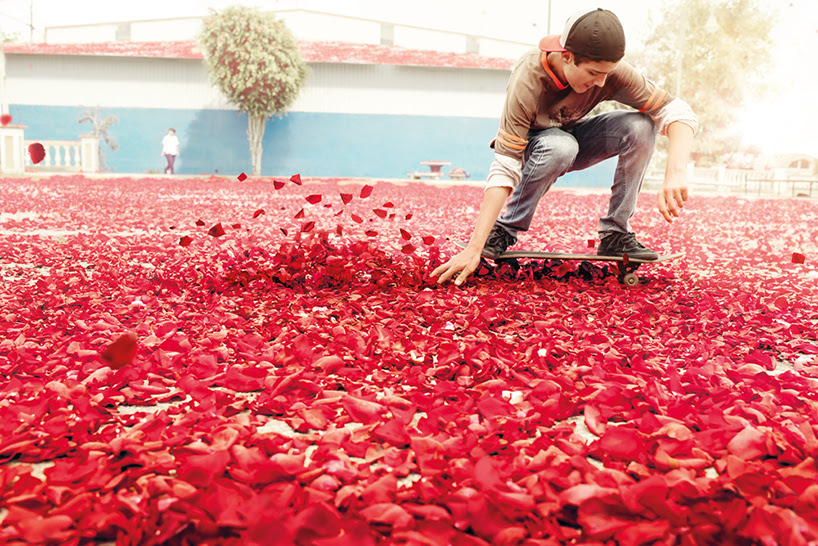 nick meek photographs flower petals in HD