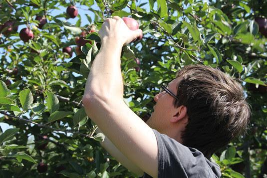 blog lovelymissmegs megan apple picking pingles farm