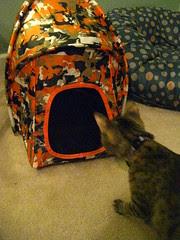 Maggie's new tent
