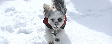 A dog in the snow (PA)