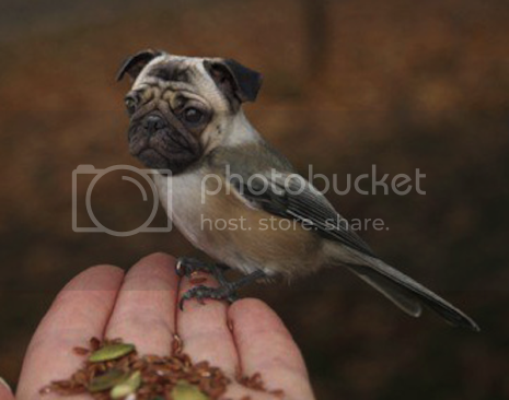 photo 03DirdsAKADogbirds_zps565f227b.png