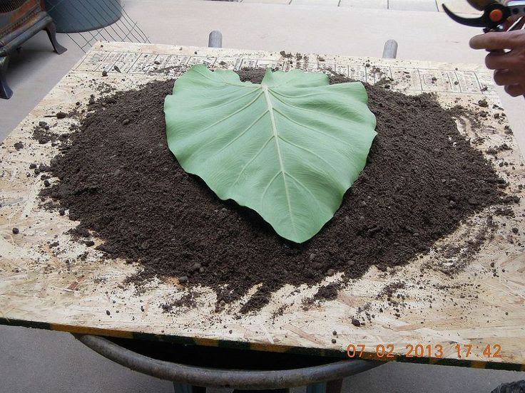 (1) Hometalk :: Making bird baths & garden art out of concrete & leaves