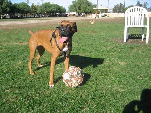 me gusta el futbol!