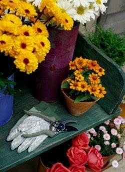 10 Fall Garden Tips