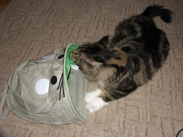 Zabawka Szeleszczący Worek Dla Kota Koci Testerzy świat Kotów