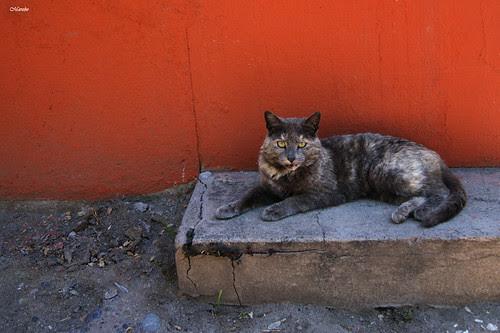 Gato de cementerio. by Alejandro Bonilla