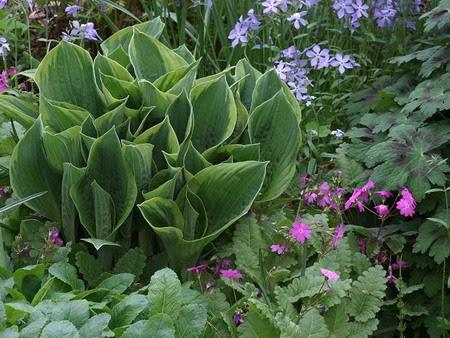 perennial plants 3