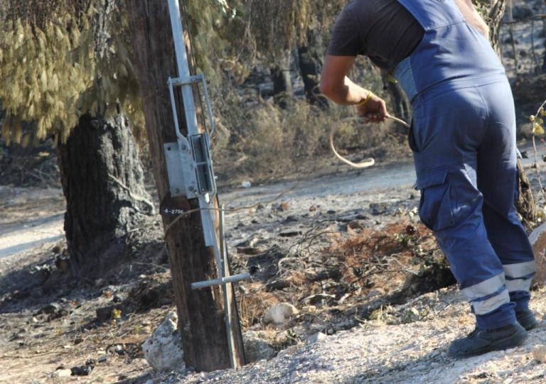 Απίστευτο! Βοσκός στα Τρίκαλα έκοψε στύλους της ΔΕΗ για να φτιάξει μαντρί! | Newsit.gr