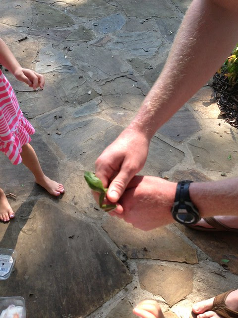tree frog1