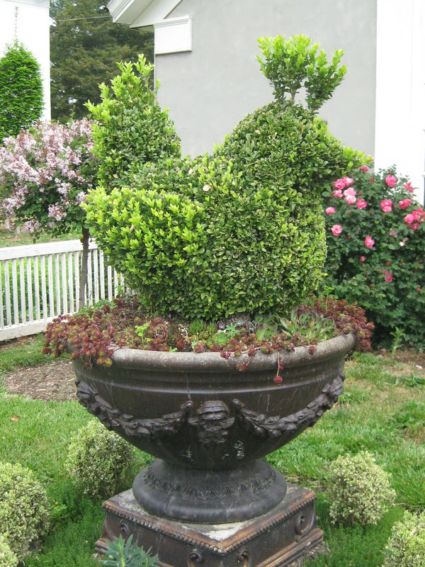 studio: boxwood topiary bird