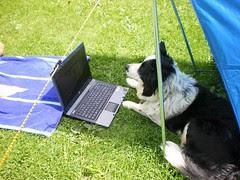 Webber achter de computer