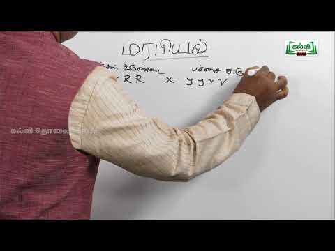 NEET BIO Botany தாவரவியல் மரபியல் பகுதி 01 & 02  Kalvi TV