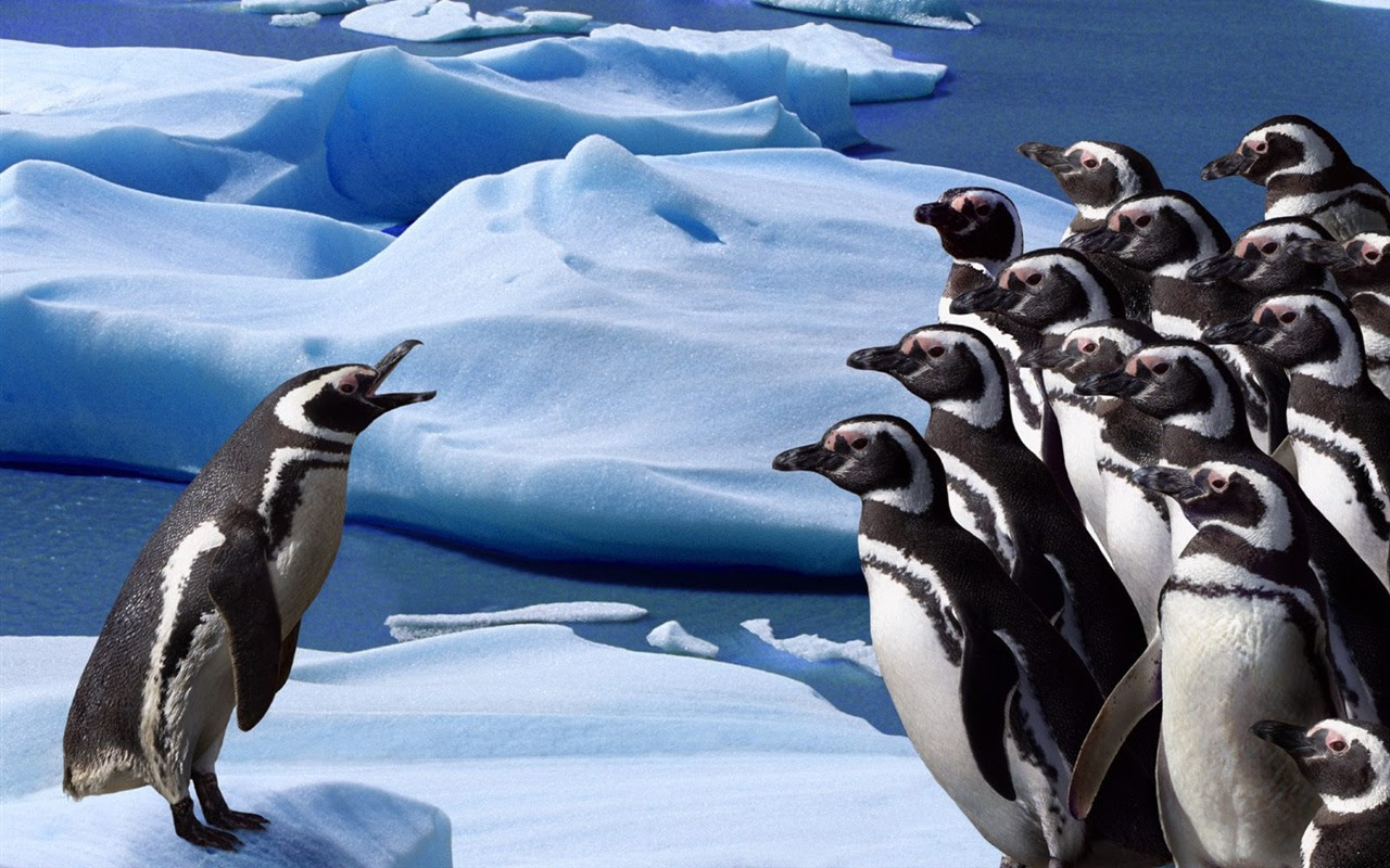ペンギン写真の壁紙 19 1280x800 壁紙ダウンロード ペンギン写真