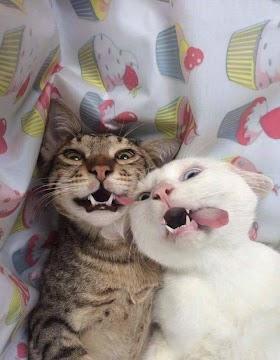 Kucing Lucu Selfie