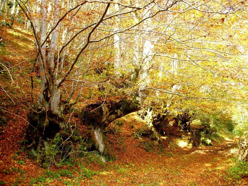 Bosque de Lindes 015