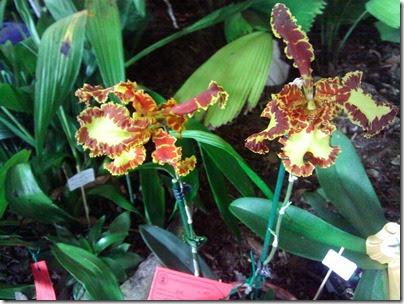 Orquideas012