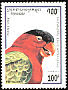 Black-capped Lory Lorius lory