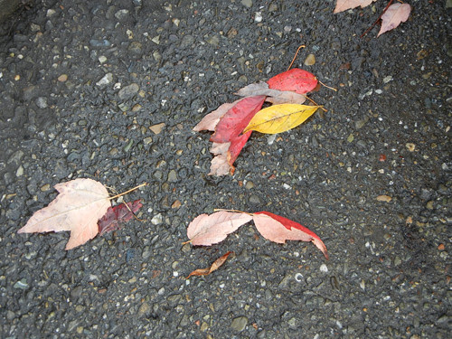 Red Leaves _ 8145
