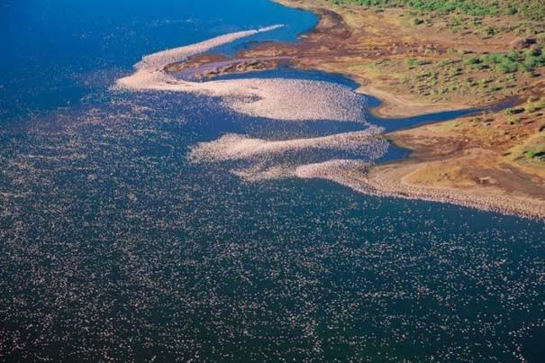 Nakuru: Η λίμνη με τα εκατομμύρια Flamingos (6)
