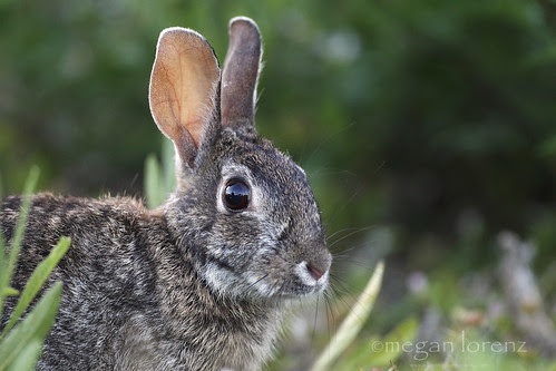 Bunny by Megan Lorenz
