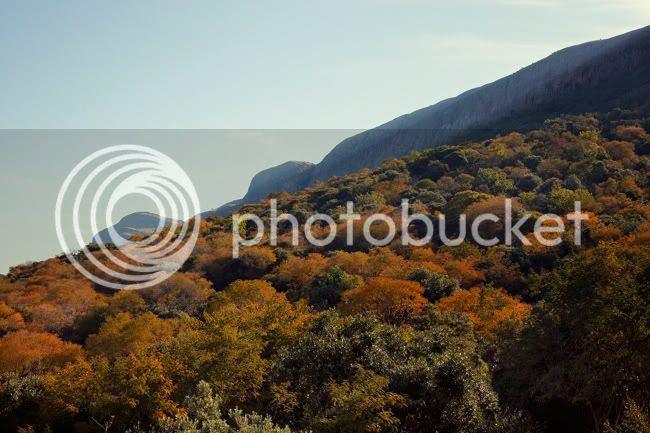 http://i892.photobucket.com/albums/ac125/lovemademedoit/PARRY_DETAILS243.jpg?t=1319741606