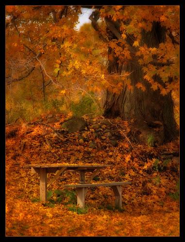 Warm Autumn Days