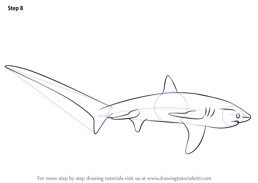 Thresher Shark Drawing Sketch Coloring Page