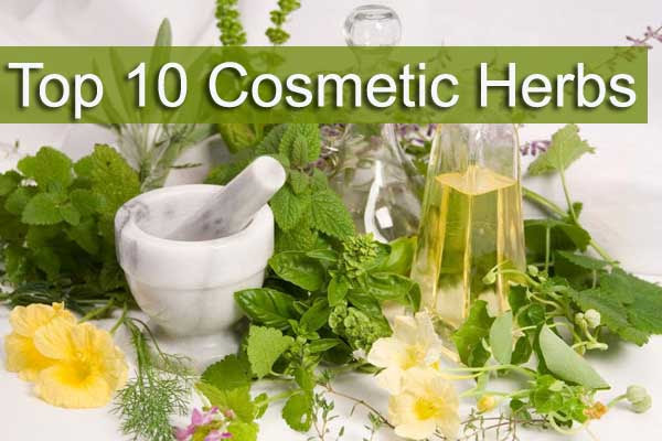 Top 10 Herbs Used in