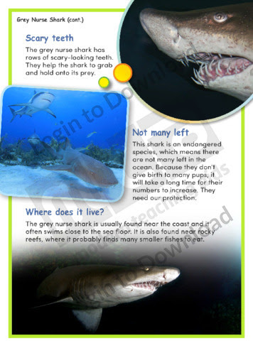 Lesson Zone Au Grey Nurse Shark