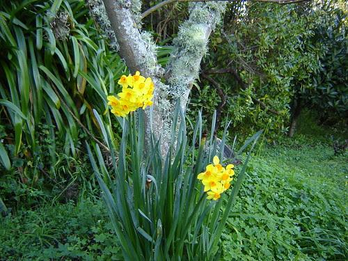Almost Spring Garden 1