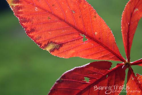 fall colors-1