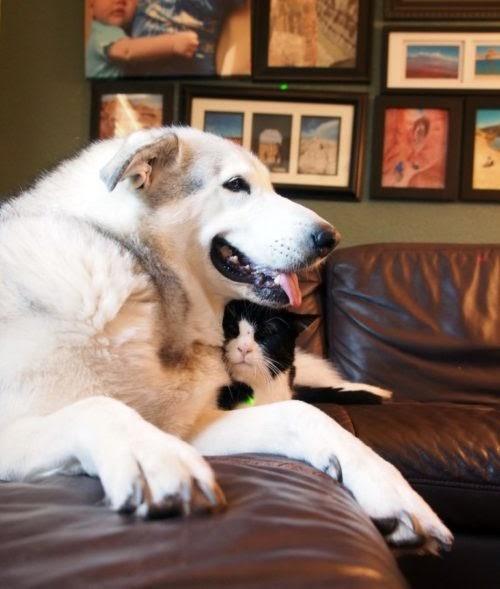 Pierde al gatito que era su mejor amigo pero encuentra la forma perfecta de honrar su memoria