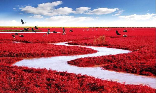Resultado de imagem para praia vermelha china