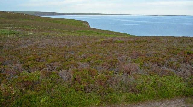 File:Heath on coastal terrace, Hobbister RSPB Reserve - geograph.org.uk - 534574.jpg