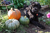 skippy and my pumpkins