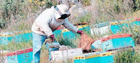 Μειωμένη η παραγωγή και ο πληθυσμός των μελισσών στην Ξάνθη