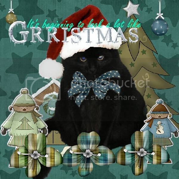 House Panther,Domestic Cat,Grr,Winter,Christmas