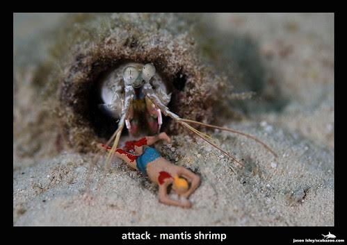 UW attack - mantis shrimp