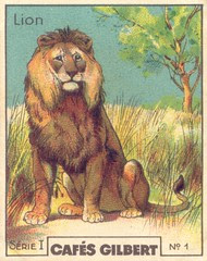 gilb lion