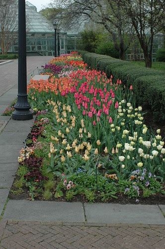 Spring Bulbs in the Annual Border of the Lily Pool Terrace