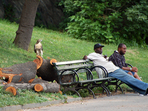 Morningside Park Users