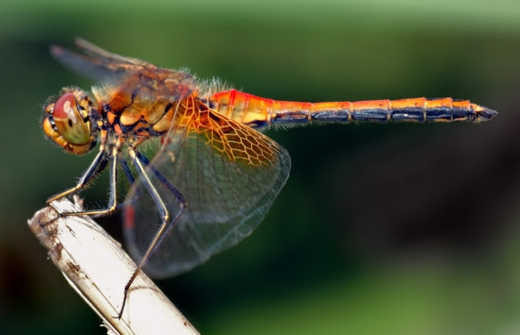 dragonfly-post