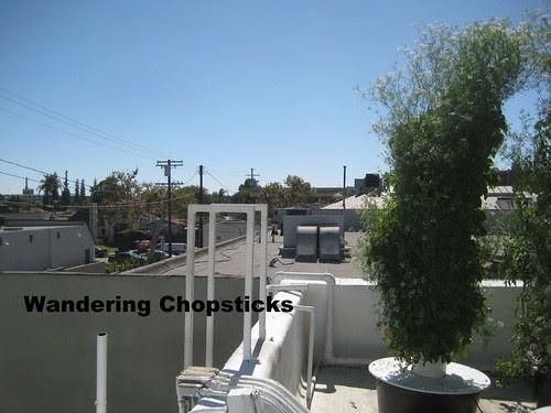 Rooftop Garden - Playa Restaurant - Los Angeles 25