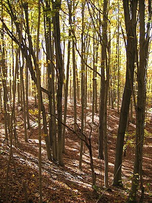 Forest in Mono Cliffs Provincial Park on the B...