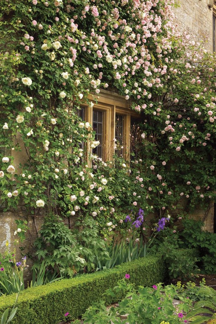 If you have enough sun don't underestimate the majesty of the climbing rose. Try New Dawn for pink or John Cabot for red in abundance!