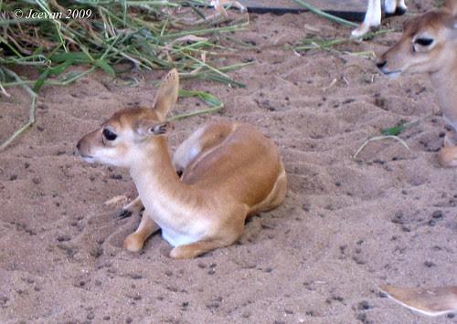 cute buck