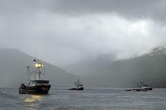 Chignik Lagoon - Fishing Vessels at Anchor